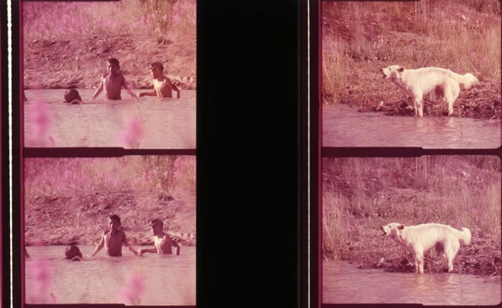 Swimming children and barking dog, 35mm film frames, Polar Life. Courtesy of Graeme Ferguson.